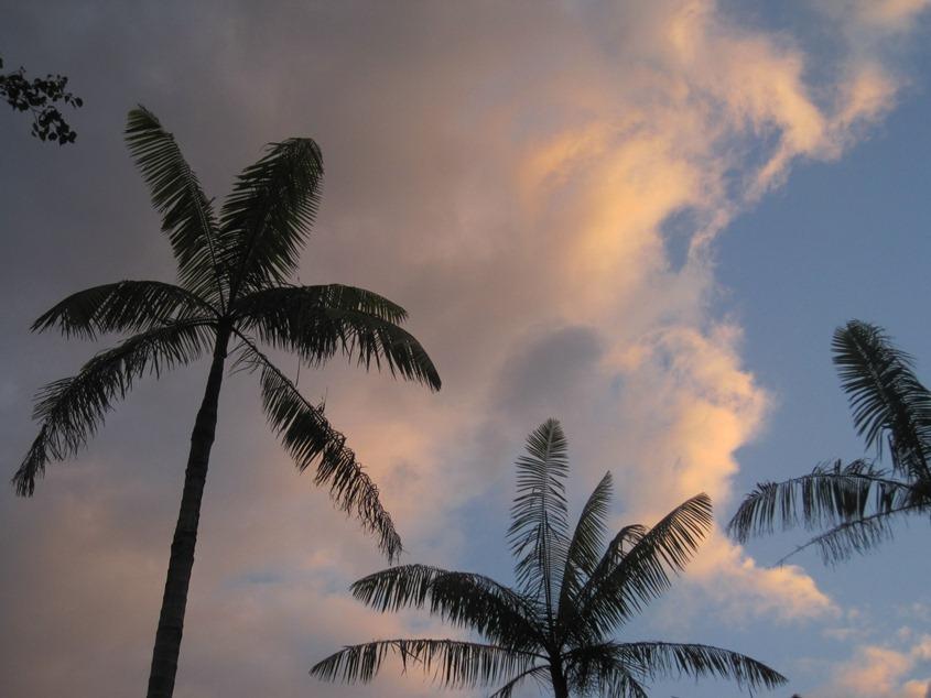 椰树、云彩、霞光与蓝天