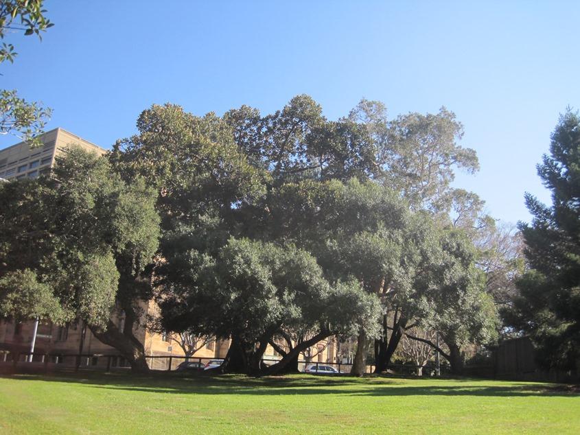 到处是大树、草坪