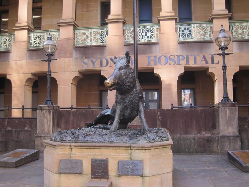 悉尼医院。为什么放个野猪的雕塑?是野猪吧