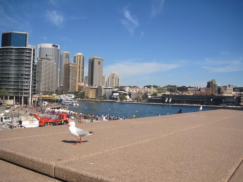 Sydney cove,一只海鸥飞进了镜头里